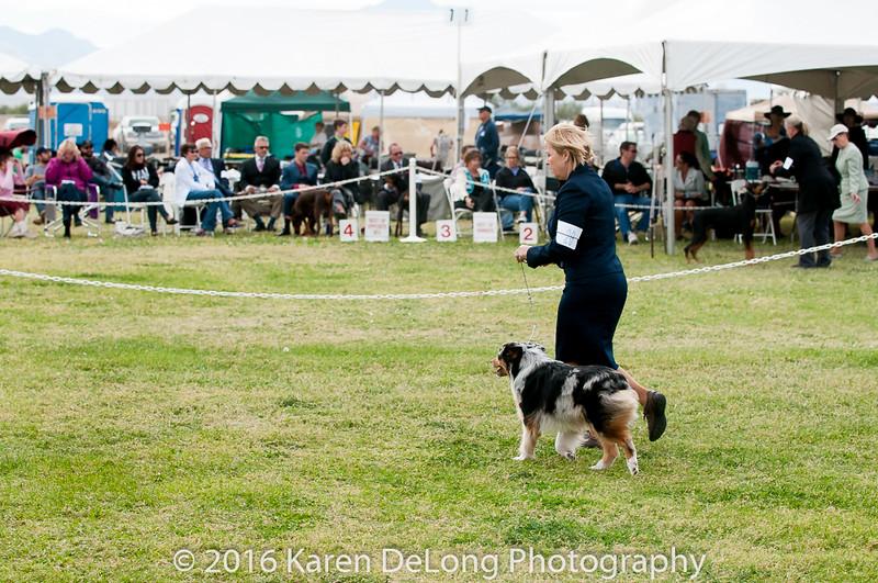20161120_Greater Sierra Vista Kennel Club_Aussies-299