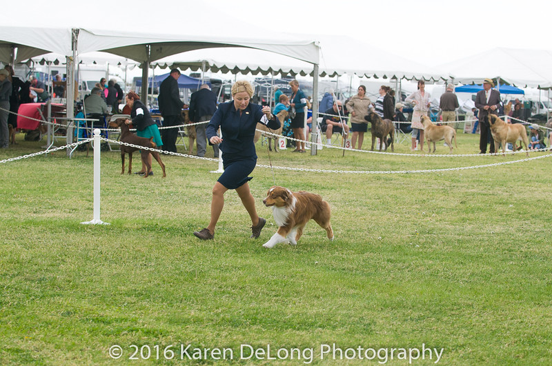 20161120_Greater Sierra Vista Kennel Club_Aussies-66