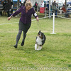 20161120_Greater Sierra Vista Kennel Club_Aussies-252