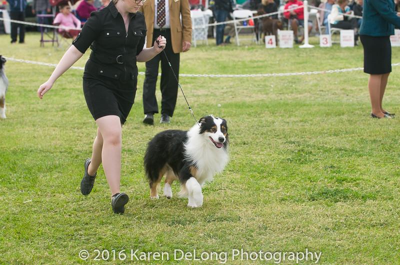 20161120_Greater Sierra Vista Kennel Club_Aussies-181