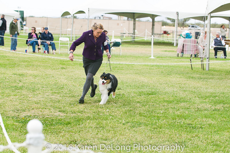 20161120_Greater Sierra Vista Kennel Club_Aussies-86