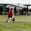 20161120_Greater Sierra Vista Kennel Club_Aussies-369