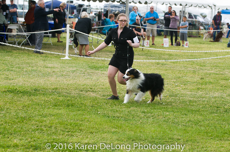 20161120_Greater Sierra Vista Kennel Club_Aussies-124