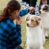 20161120_Greater Sierra Vista Kennel Club_Aussies-321