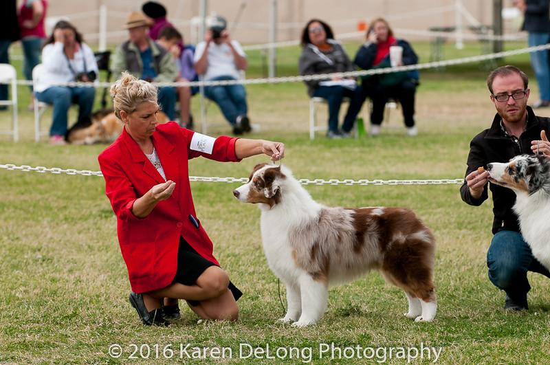 20161120_Greater Sierra Vista Kennel Club_Aussies-350