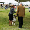 20161120_Greater Sierra Vista Kennel Club_Aussies-138
