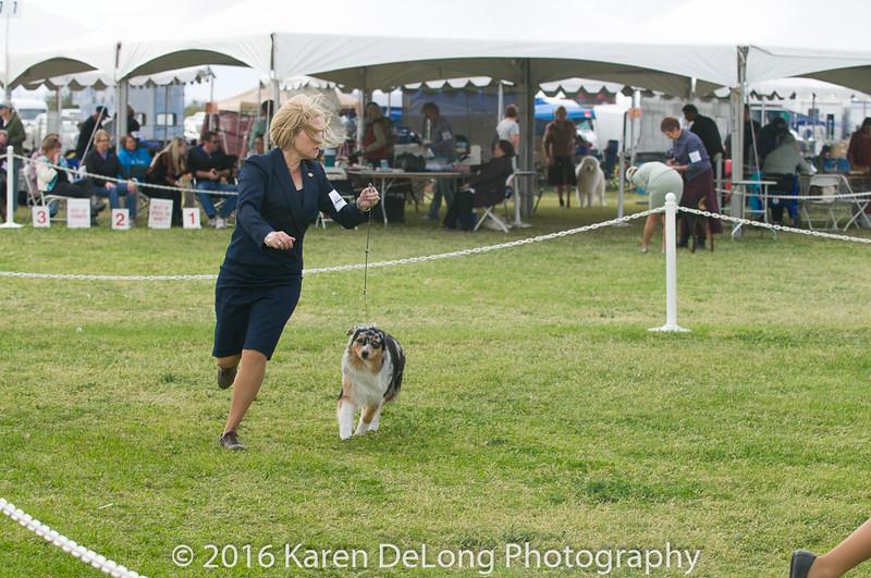 20161120_Greater Sierra Vista Kennel Club_Aussies-279