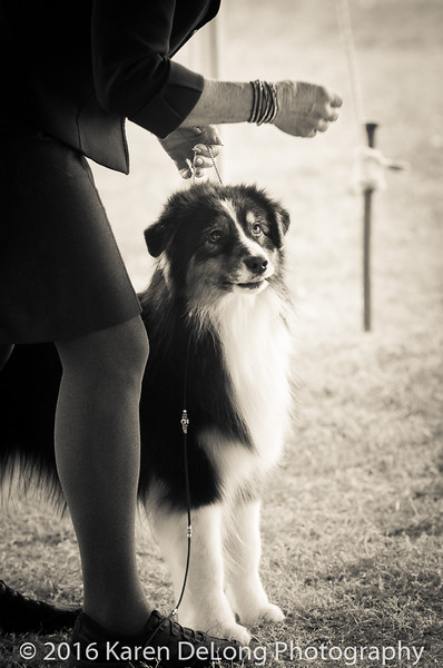 20161120_Greater Sierra Vista Kennel Club_Aussies-255