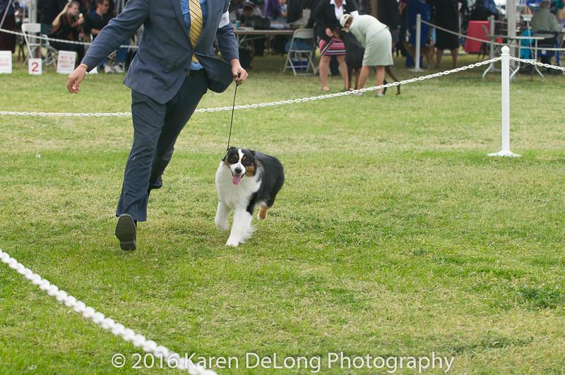 20161120_Greater Sierra Vista Kennel Club_Aussies-54