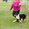 20161120_Greater Sierra Vista Kennel Club_Aussies-14