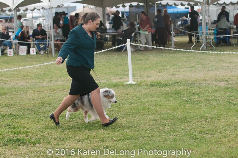 20161120_Greater Sierra Vista Kennel Club_Aussies-286