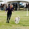 20161120_Greater Sierra Vista Kennel Club_Aussies-358