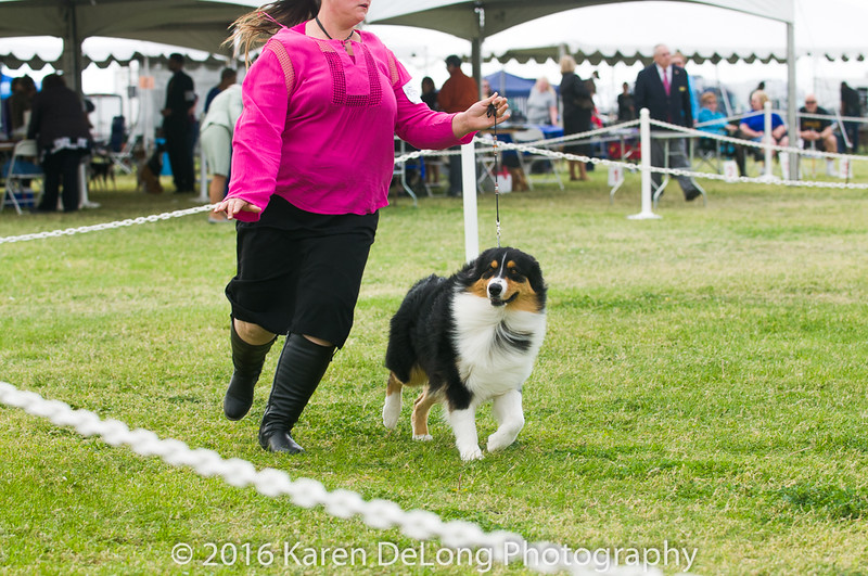 20161120_Greater Sierra Vista Kennel Club_Aussies-104