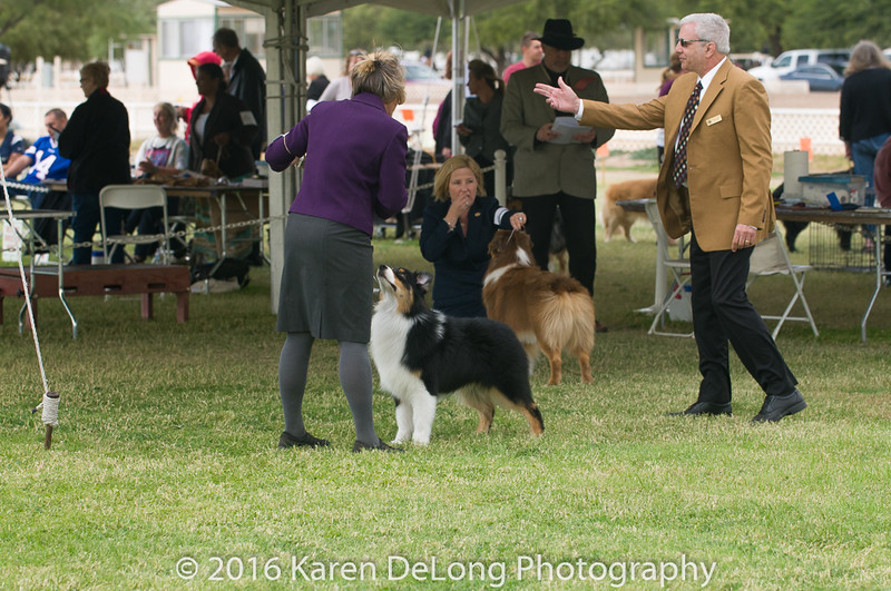 20161120_Greater Sierra Vista Kennel Club_Aussies-84