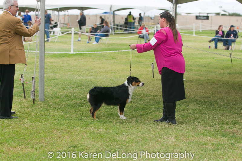 20161120_Greater Sierra Vista Kennel Club_Aussies-18