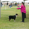 20161120_Greater Sierra Vista Kennel Club_Aussies-18