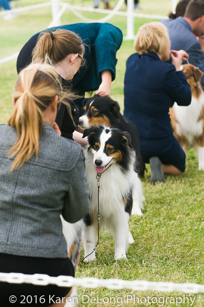 20161120_Greater Sierra Vista Kennel Club_Aussies-159