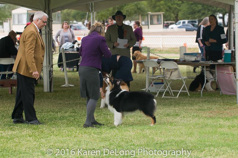 20161120_Greater Sierra Vista Kennel Club_Aussies-82
