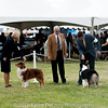 20161120_Greater Sierra Vista Kennel Club_Aussies-208