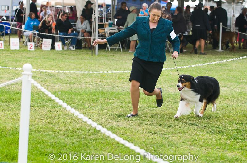 20161120_Greater Sierra Vista Kennel Club_Aussies-96