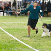 20161120_Greater Sierra Vista Kennel Club_Aussies-96