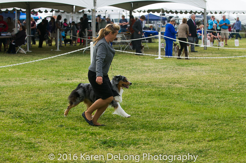 20161120_Greater Sierra Vista Kennel Club_Aussies-136