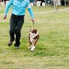 20161120_Greater Sierra Vista Kennel Club_Aussies-240