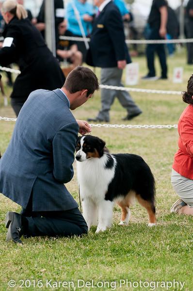 20161120_Greater Sierra Vista Kennel Club_Aussies-227