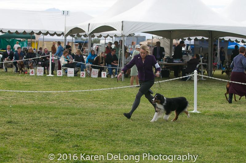 20161120_Greater Sierra Vista Kennel Club_Aussies-263