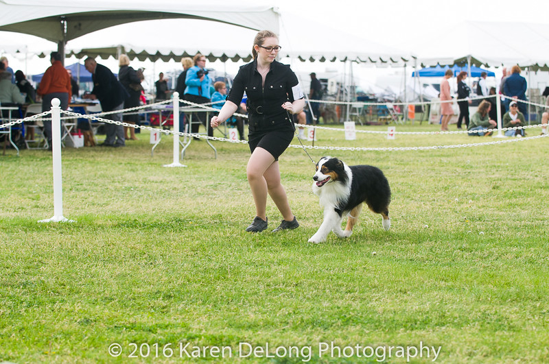 20161120_Greater Sierra Vista Kennel Club_Aussies-99