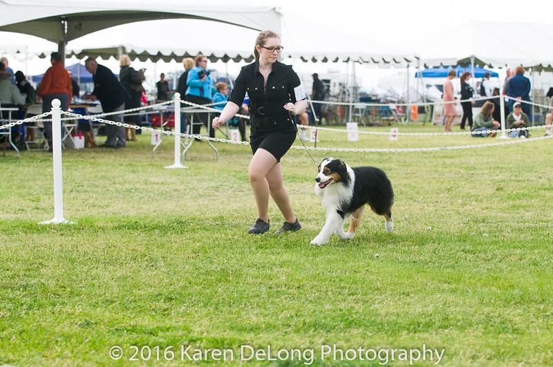 20161120_Greater Sierra Vista Kennel Club_Aussies-99