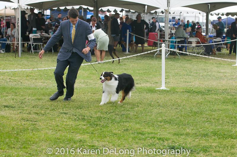 20161120_Greater Sierra Vista Kennel Club_Aussies-51