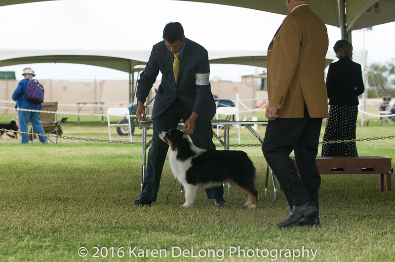20161120_Greater Sierra Vista Kennel Club_Aussies-45