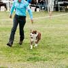 20161120_Greater Sierra Vista Kennel Club_Aussies-237