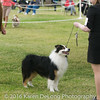 20161120_Greater Sierra Vista Kennel Club_Aussies-108