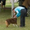 20161120_Greater Sierra Vista Kennel Club_Aussies-247