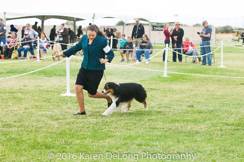 20161120_Greater Sierra Vista Kennel Club_Aussies-91