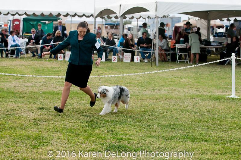 20161120_Greater Sierra Vista Kennel Club_Aussies-291