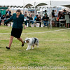 20161120_Greater Sierra Vista Kennel Club_Aussies-291