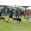 20161120_Greater Sierra Vista Kennel Club_Aussies-185