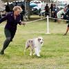 20161120_Greater Sierra Vista Kennel Club_Aussies-359