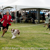 20161120_Greater Sierra Vista Kennel Club_Aussies-370