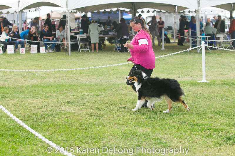 20161120_Greater Sierra Vista Kennel Club_Aussies-115