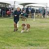 20161120_Greater Sierra Vista Kennel Club_Aussies-68