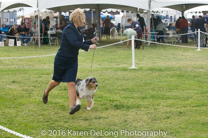 20161120_Greater Sierra Vista Kennel Club_Aussies-282