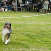 20161120_Greater Sierra Vista Kennel Club_Aussies-128