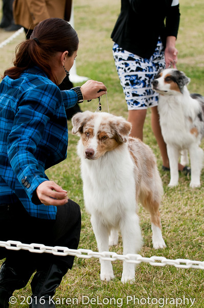 20161120_Greater Sierra Vista Kennel Club_Aussies-343