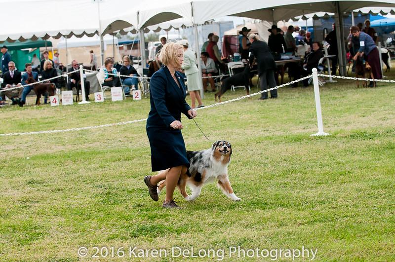 20161120_Greater Sierra Vista Kennel Club_Aussies-304