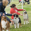 20161120_Greater Sierra Vista Kennel Club_Aussies-173