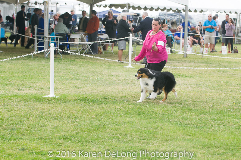 20161120_Greater Sierra Vista Kennel Club_Aussies-119